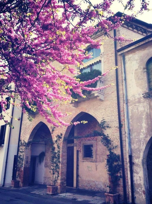 Spring has arrived in Treviso